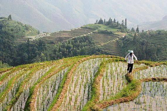 Рисовые поля Юаньян