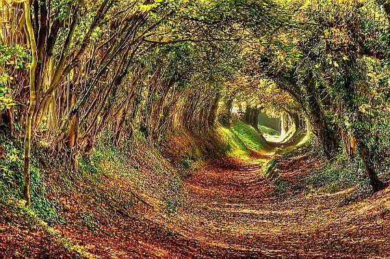 Сказочный тоннель в Англии1