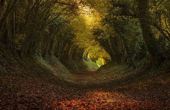 Сказочный тоннель в Англии2