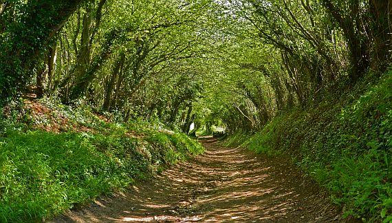 Сказочный тоннель в Англии3