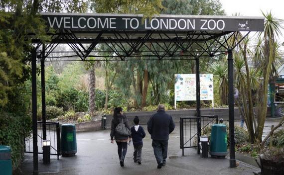 Зоопарк в Лондоне