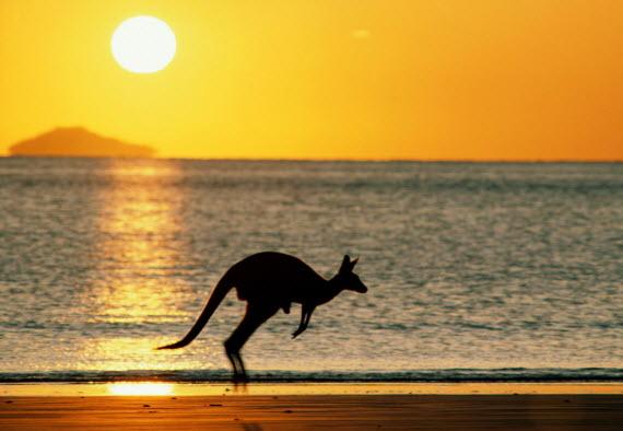Австралия. Кенгуру