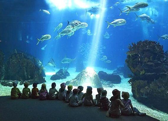 Океанариум (Phuket aquarium)