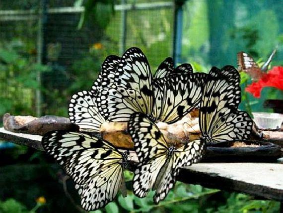 Сад бабочек в Пхукете