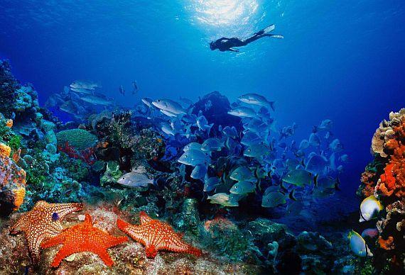 Дайвинг - подводный мир