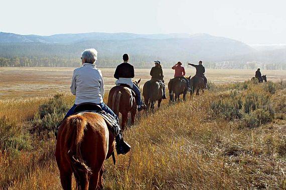 Отдых катание на лошадях