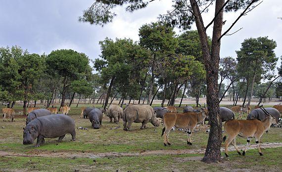 Зоопарк Сафари. Израиль