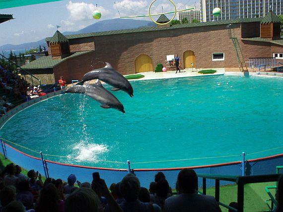 Дельфинарий в Утрише