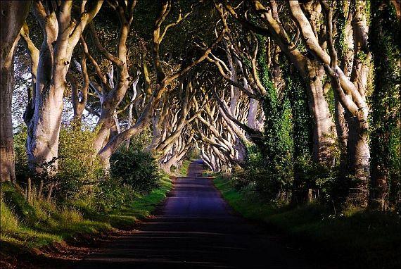 Аллея в Ирландии