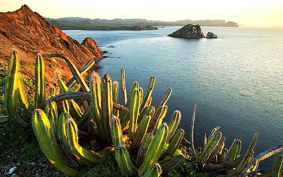 Кактусы Мексики фото