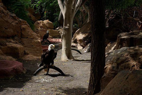 Тенерифе парк орлов