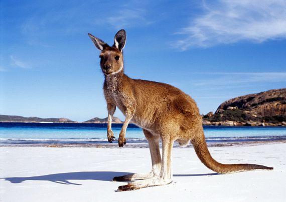 Туризм в Австралии