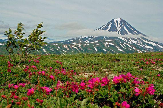Болгария страна роз