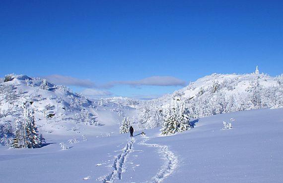 Лыжный маршрут по Вологодской области