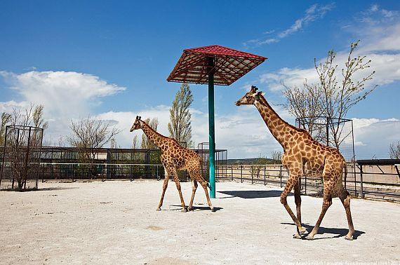 Сафари парк Тайган в Крыму