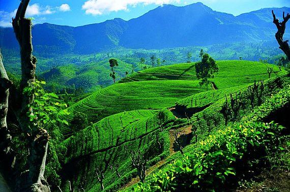 Природа Шри Ланки