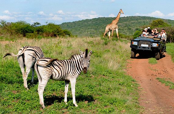 Сафари в Африке в наше время