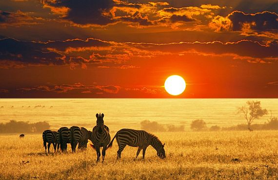 Отдых в Африке: Африканское сафари