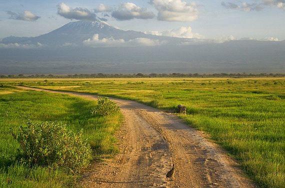 Страна Африки Кения