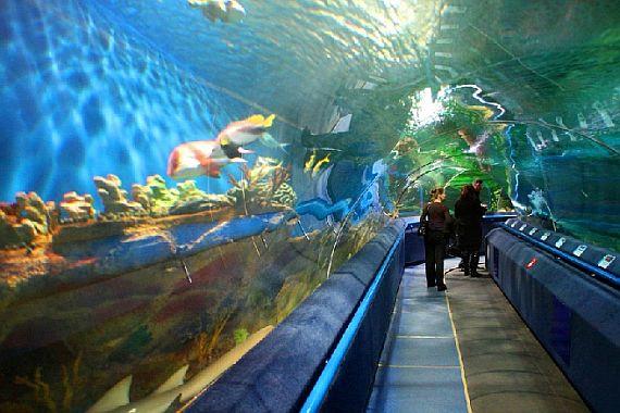 Океанариум в Петербурге