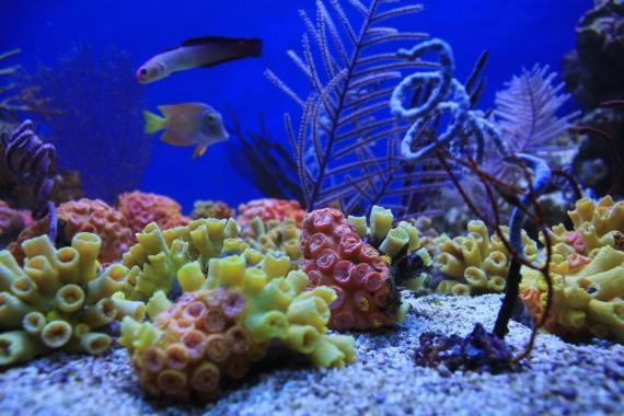 Москва. Чистые Пруды «Коралловый сад»