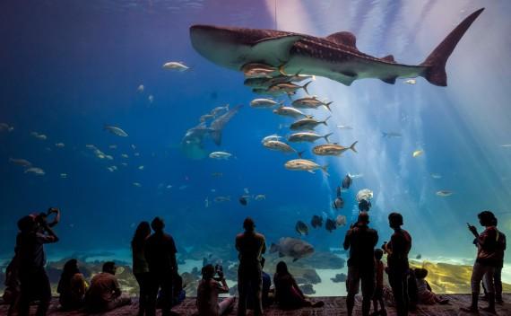 Удивительный мир аквариумов